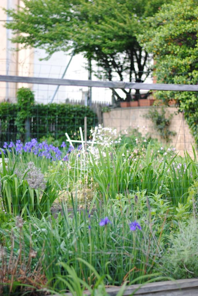 community garden 06